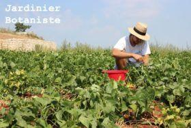 Comment devenir jardinier botaniste