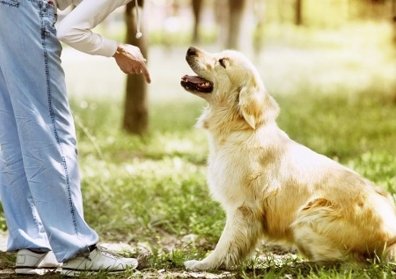 Devenir éducateur de chiens