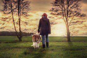 Comment devenir éducateur de chiens