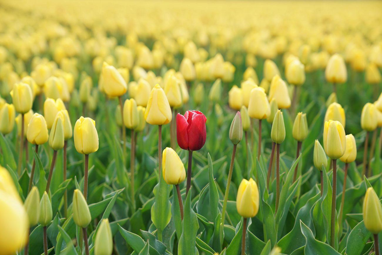 se démarquer de la concurrence fleur différente jaune rouge